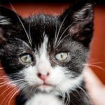 A tale of the Scrapyard Kitties