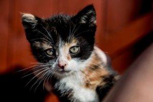 Scrapyard Kitties