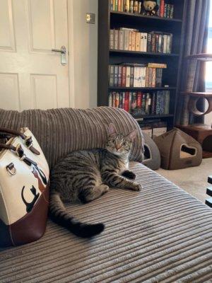 cat sitting wakefield Bonny