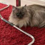 Cat sitting wakefield Suki