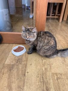 cat sitting wakefield roxy