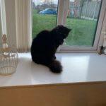Suki by the window
