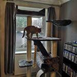 Cats In Lockdown
