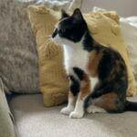 Cat sitting Wakefield